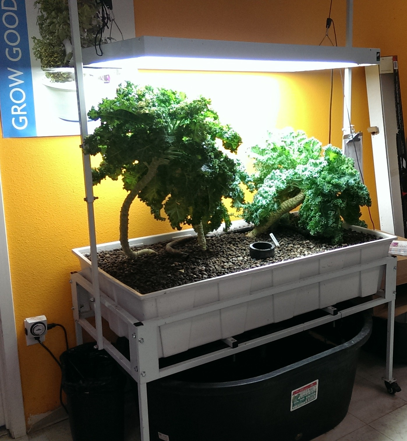 Coming Soon Brite Ideas Aquaponics Hydroponics Amp Organics