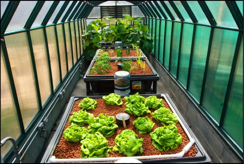AQUAPONICS - Off the Grid and On the Cheap with Jason Avent! - Brite